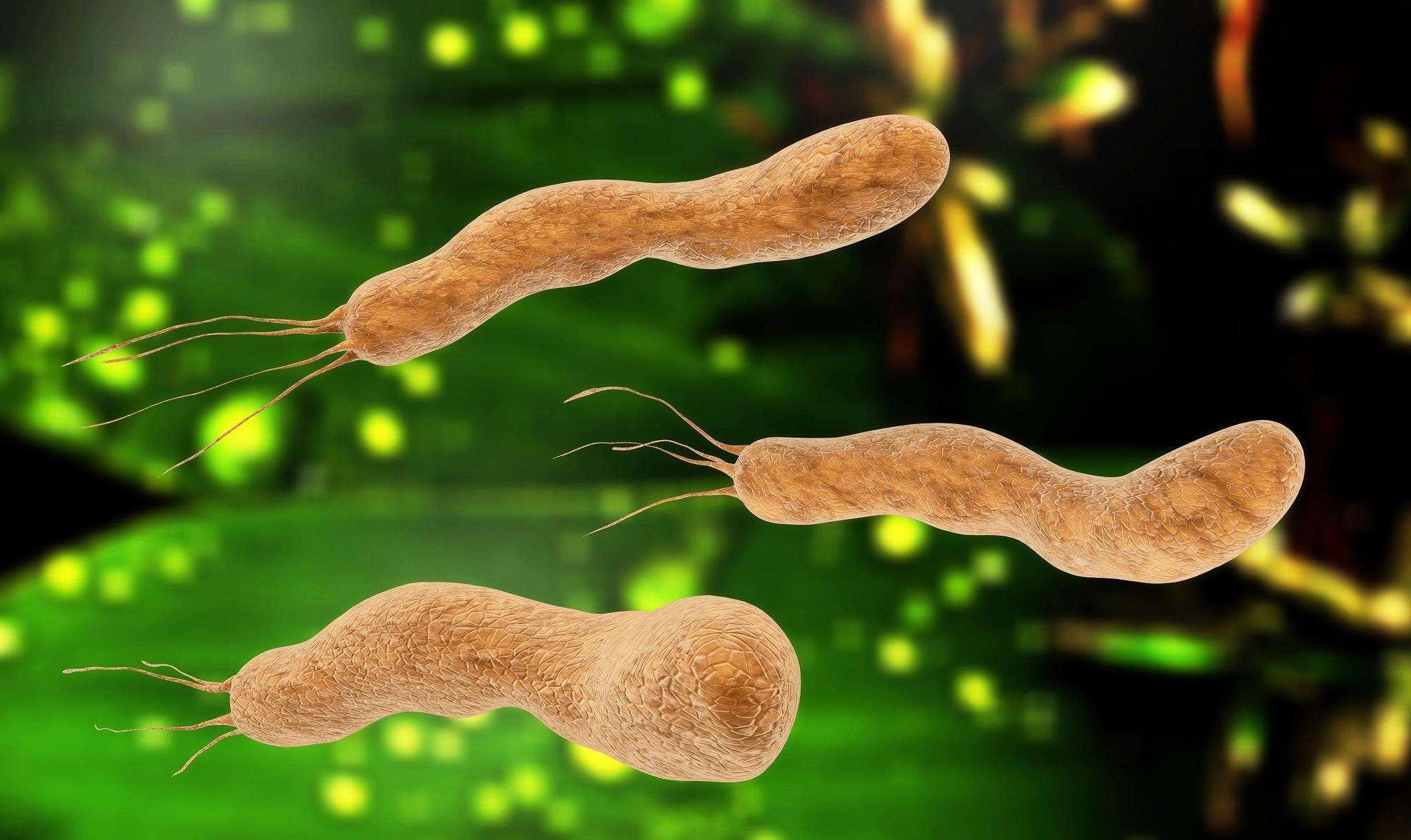 幽门螺旋杆菌